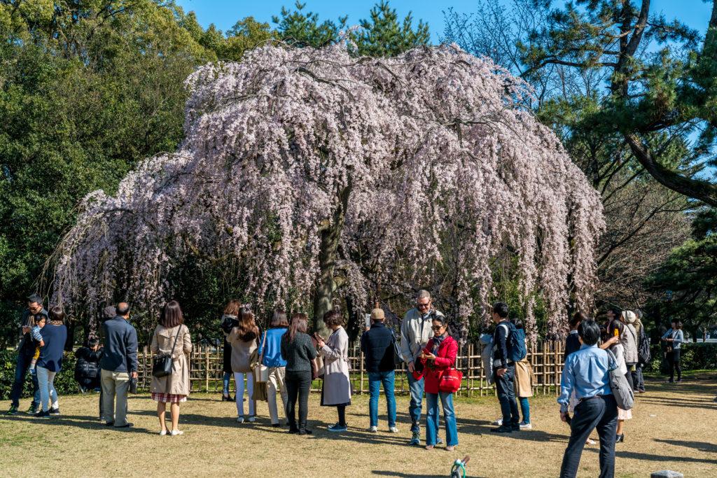 fot. Andrzej Skwarczynski (24.03.2018) Kioto, Japonia
